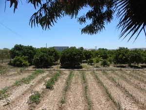 Plot for sale in Rojales