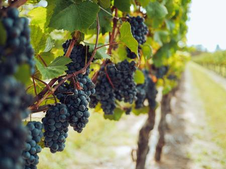 A Peek At Spain's Wine And Grape Diversity