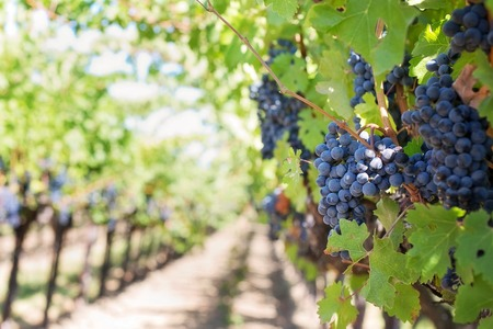 Who Told You Costa Blanca Was Only About Paradise Beaches - Here´s Its Amazing Wine Culture