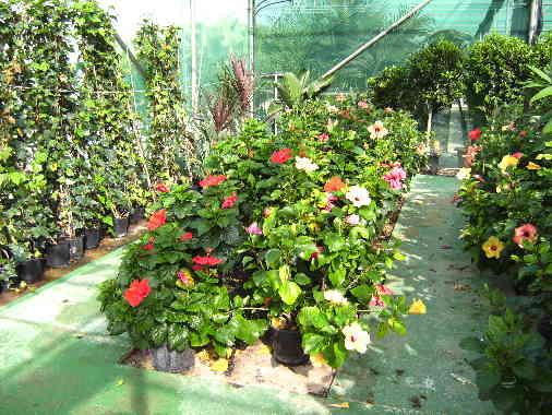 Javea Flowers