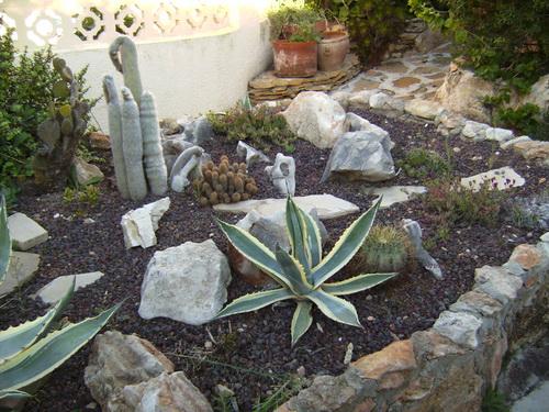 Moraira Cacti