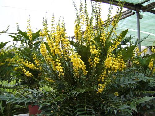 Plants for Moraira Properties