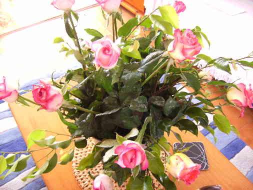 Moraira Roses