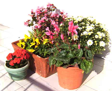 Selection of Plants