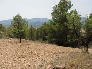 Plot for sale in Murcia