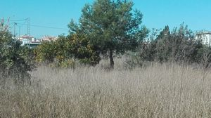 Plot for sale in Oliva