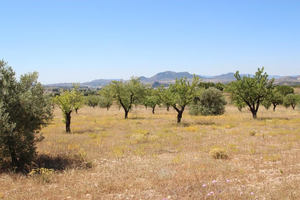Large plot of land in Sax with planning permission